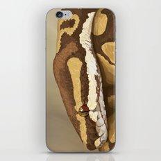 Ball Python (Odysseus) iPhone & iPod Skin