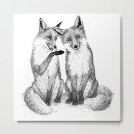 Gossip foxes Metal Print