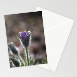 Opening Pasque Flower Stationery Cards
