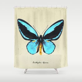Butterfly01_Ornithoptera  Aesacus Shower Curtain