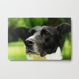 Batdog Metal Print
