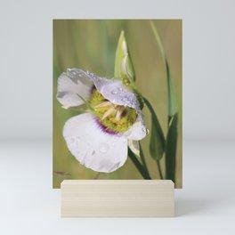 Lily Dew Mini Art Print