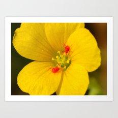 Wildflower with clover mites Art Print