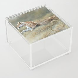 On Target - Lioness by Alan M Hunt Acrylic Box