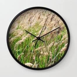 Blooming foxtail in summer sunny day Wall Clock