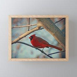 Pretty Male Cardinal Framed Mini Art Print
