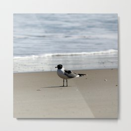 Ocracoke Seagull  1 Metal Print