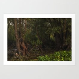 mystic willow Art Print