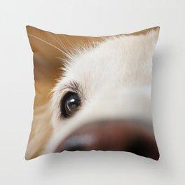 Fluffy Tetriever Close up Throw Pillow