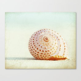 Seashell Beach Photography, Shell Coastal Photo, Peach Mint Seashells Print Canvas Print