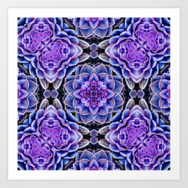Echeveria Bliss Two Art Print