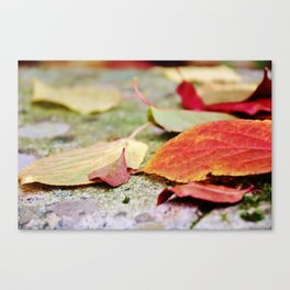 Fallen red and yellow leaves Canvas Print