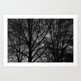 Thick Silhouetted Trees Art Print