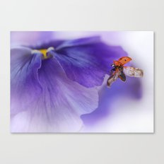 Ladybird on violet Canvas Print