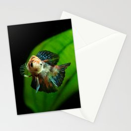 Koi Betta Boy Stationery Cards