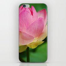 Lotus Blossom Flower 26 iPhone & iPod Skin