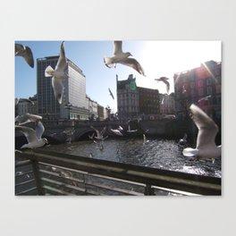 Dublin City Seagulls (Liffey) Canvas Print
