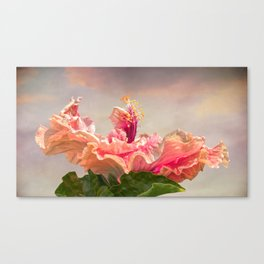 isolated hibiscus in bloom on tecture background Canvas Print