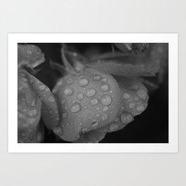 Flowers and Rain Art Print