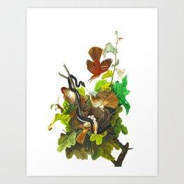 Ferruginous Thrush Bird Art Print