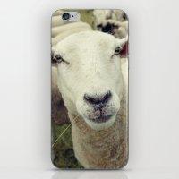 sheep iPhone & iPod Skins featuring Sheep by Falko Follert Art-FF77