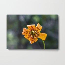 Tiger lily flower Metal Print