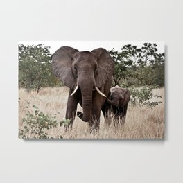 Elephant & Calf Metal Print