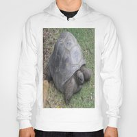 tortoise Hoodies featuring tortoise by shannon's art space