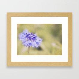 Wild Cornflower Framed Art Print