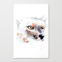 Cumpeo Fox Canvas Print