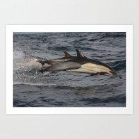 Common Dolphin flying through the air.  Art Print