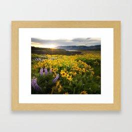 Oregon Wildflowers Framed Art Print