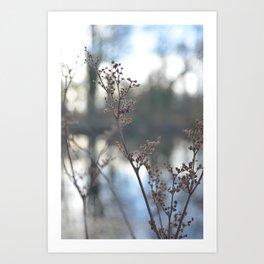 Winter Cow Parsley, Fine Art Photographic Print. Home Decor Art Print