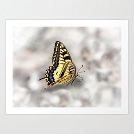 Beautiful Swallowtail Butterfly In Flight Art Print