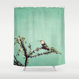 Hummingbird at rest Shower Curtain