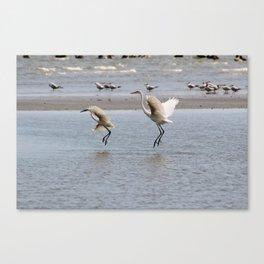 Egrets Hunting Canvas Print