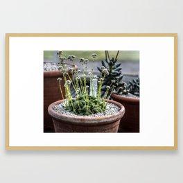 Blooming Succulent Framed Art Print