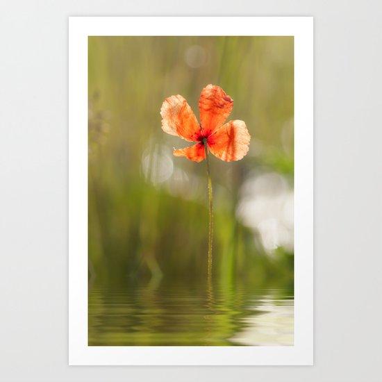 Swimming Poppyblossom Poppy Poppies Art Print