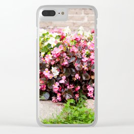 pink Begonia semperflorens clumps Clear iPhone Case