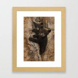 Black Bear Cubs - Curious Cubs Framed Art Print