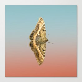 Black Witch Moth Canvas Print