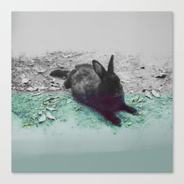 Blue Rabbit Canvas Print