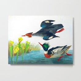 Red-breasted Merganser Bird Metal Print