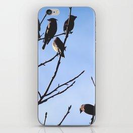 cedar waxwings iPhone Skin