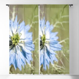 Blue flower close up Nigella love in the mist Blackout Curtain