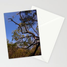 Low angle of tree with branches and leaves as background Stationery Cards