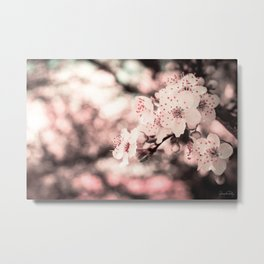 Sweet Spring (White Cherry Blossom) Metal Print