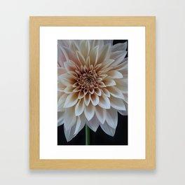 Cafe au lait dahlia Framed Art Print