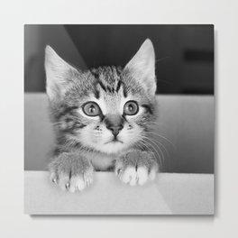 Kitten in a box Metal Print