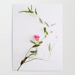 Eucalyptus Sway Poster